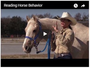 Reading Horse Behavior