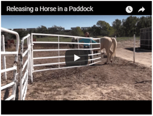 How to Release Your Horse in a Paddock with Other Horses