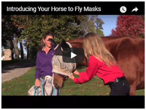 Introducing Your Horse to a Fly Mask