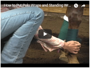 How to Put on Standing Wraps and Polo Wraps