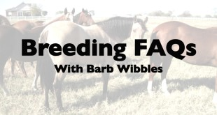 Artificial Insemination – Barb Wibbles