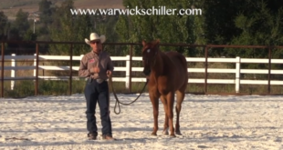 Why is My Horse Rearing with Warwick Schiller