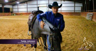 Working a Young Horse on a Flag – Teddy Johnson
