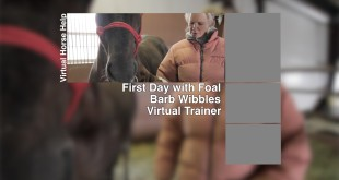 First Day with Foal – Barb Wibbles