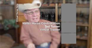 Halter Horse Conformation – Ted Turner