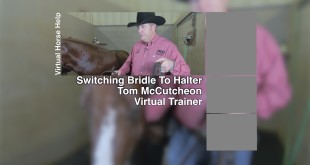 Switching from Bridle to Halter – Tom McCutcheon